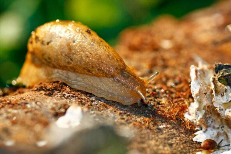 10 curiosità sulle lumache