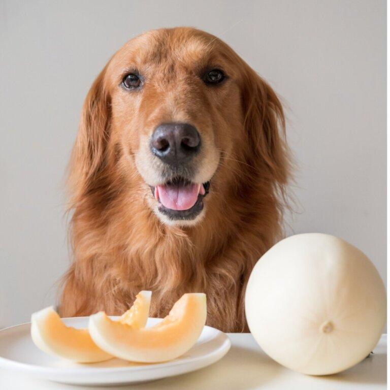 I cani possono mangiare il melone?
