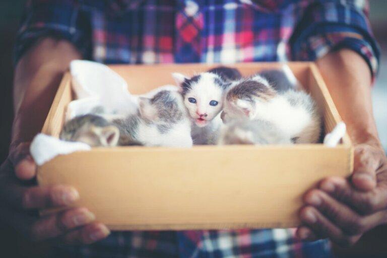 Come eliminare le pulci nei gatti appena nati?