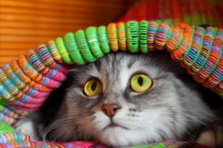 12 segni che indicano che un gatto è stressato