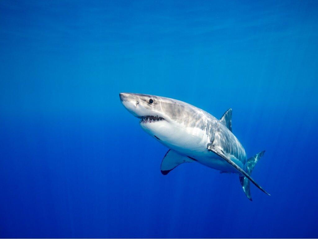 I 10 animali più pericolosi del Mediterraneo