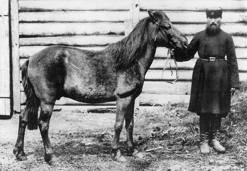 Cavallo tarpan: origine e caratteristiche