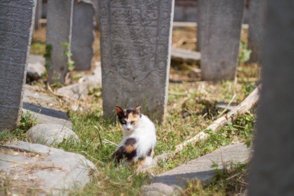12 sintomi che un gatto sta per morire