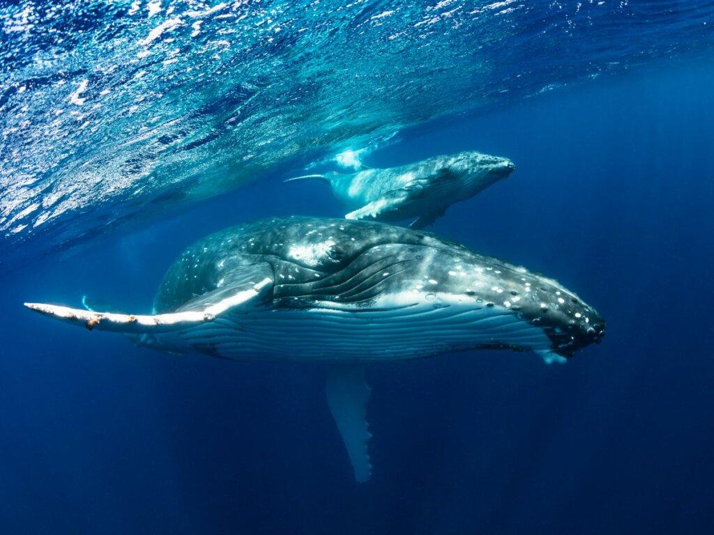 I 10 animali marini più grandi del mondo