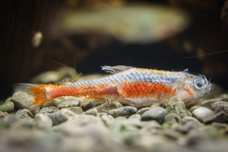Il mio pesce ha una patina bianca sul corpo: che cos'è?