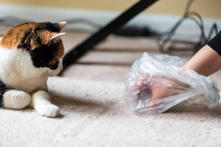 Cosa fare se il gatto smette di usare la lettiera