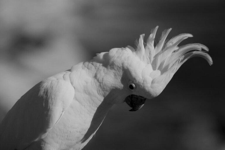 Stress negli uccelli domestici: cause, sintomi e soluzioni
