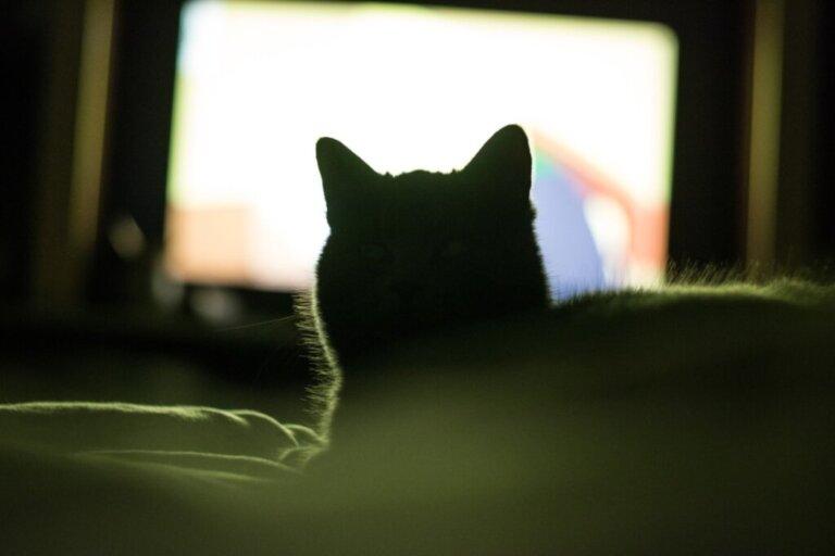 Perché ad alcuni gatti piace guardare la televisione?