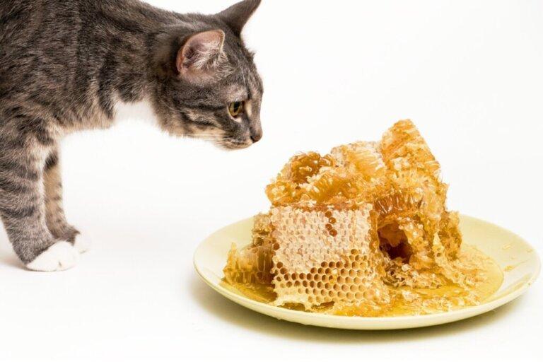 Il miele fa bene ai gatti?