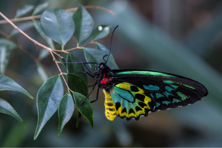 Il mutualismo in biologia