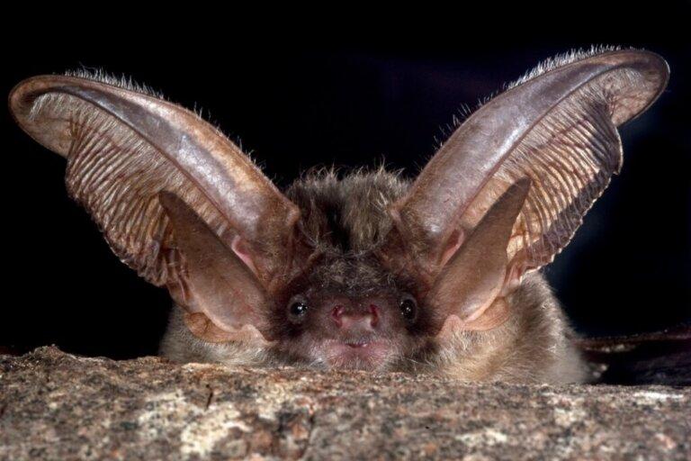 Come spaventare i pipistrelli