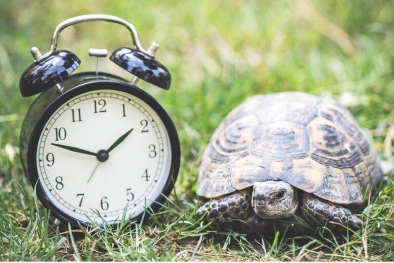 Quanti anni vive una tartaruga domestica?