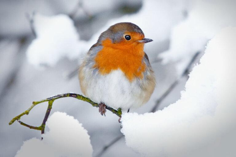 I 10 uccelli più comuni in Spagna