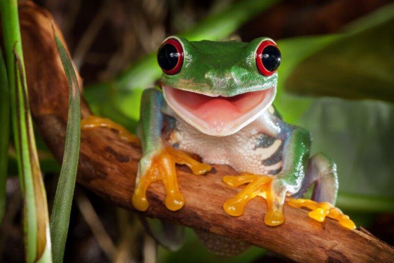 Gli occhi più belli e strani del mondo animale