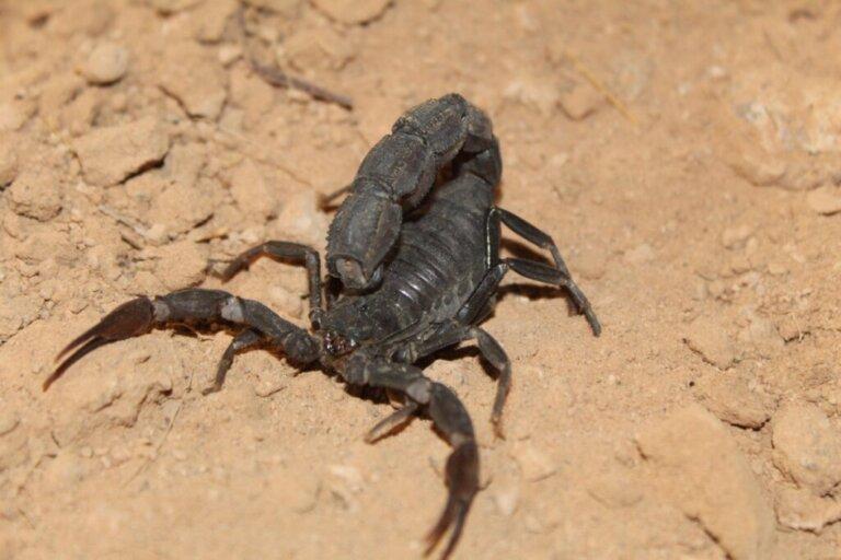 I 10 animali del deserto più pericolosi